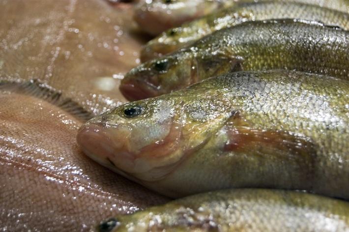 kalanpaa