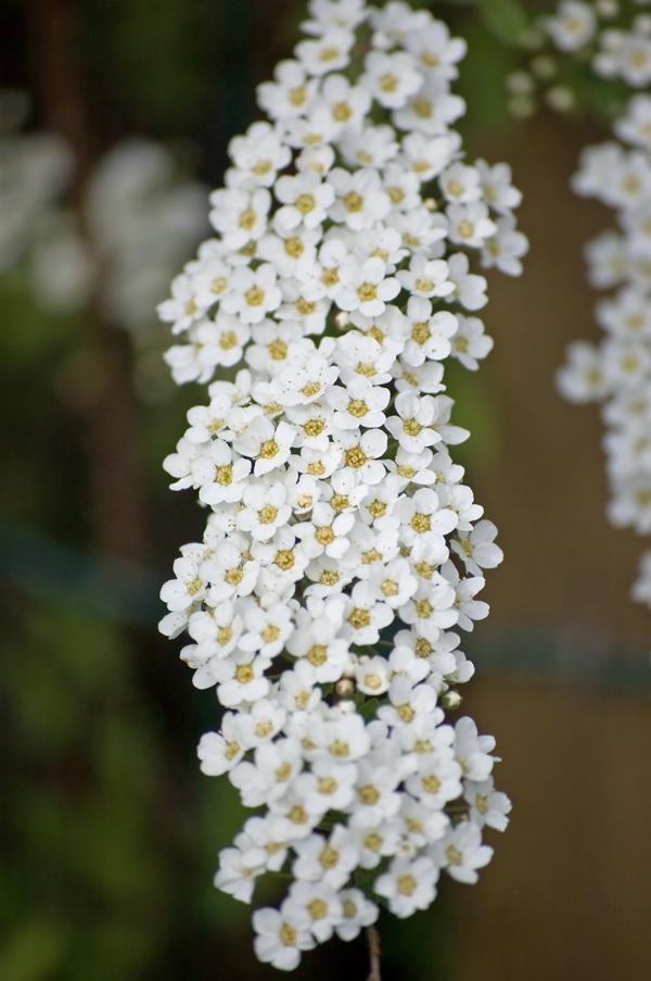 kukkaputous