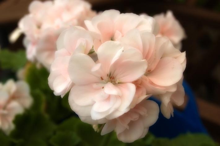 pinkki-soft