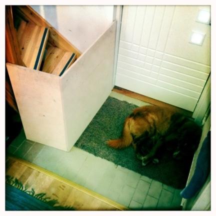 portti ja koira.jpg