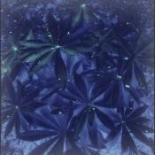 sininen-11