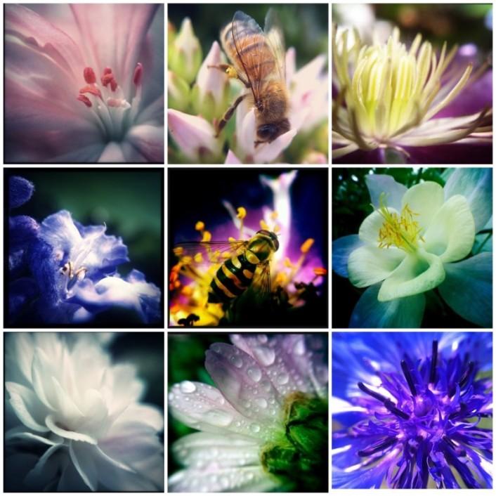 kukkamakrot