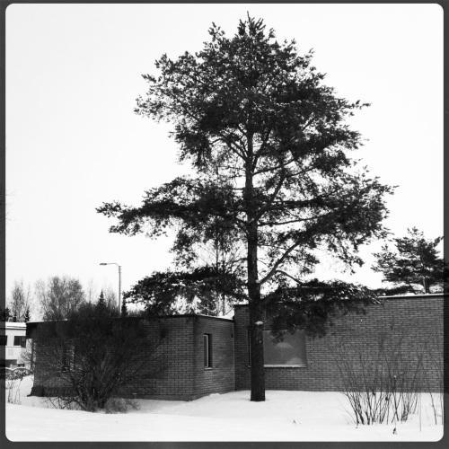 puu nurkassa